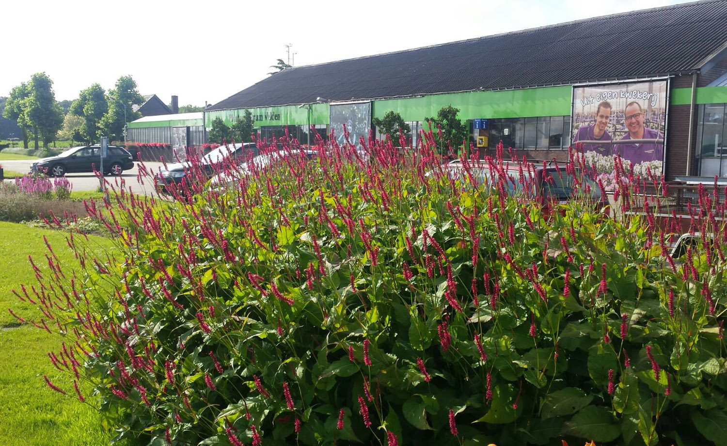 border_tuincentrum
